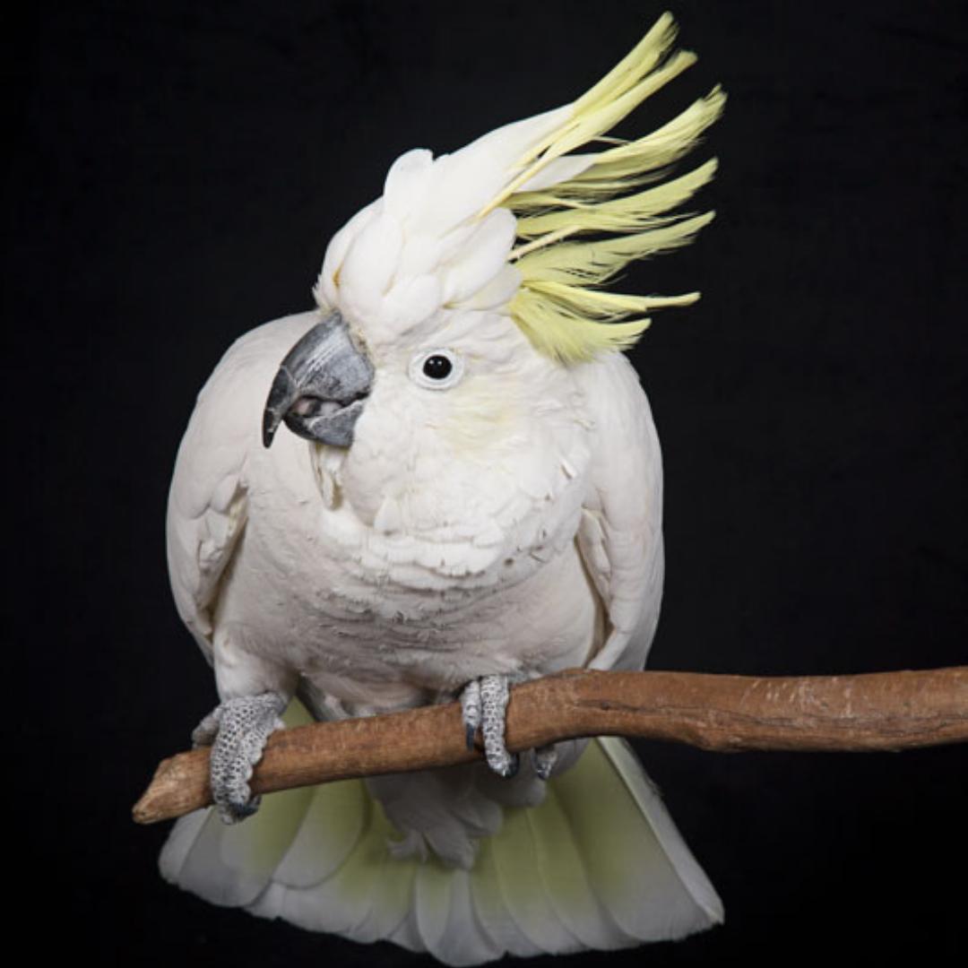 portfolio link birds