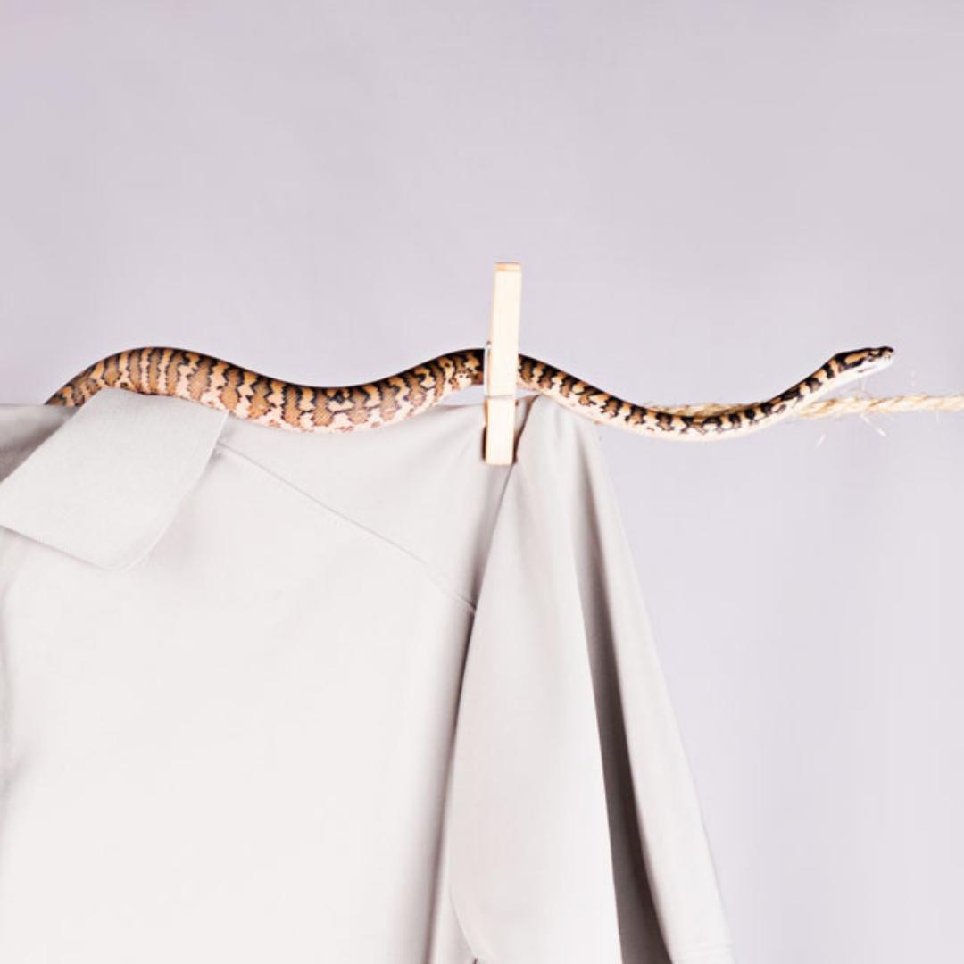 portfolio link reptiles and fish