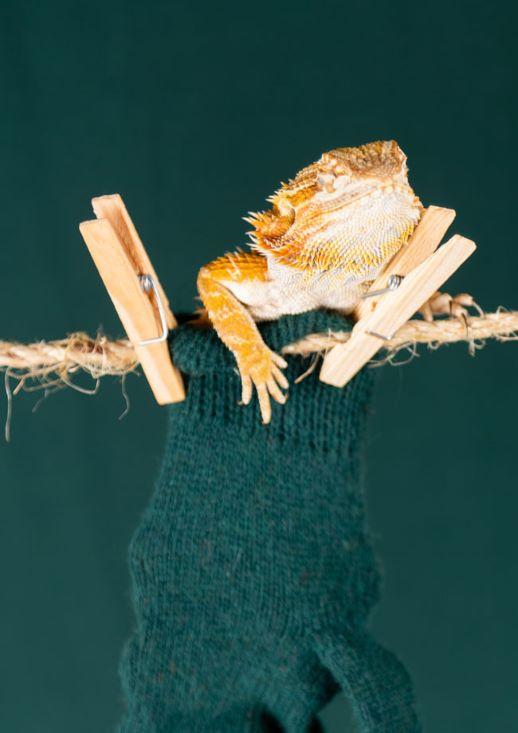MEPET Lizard