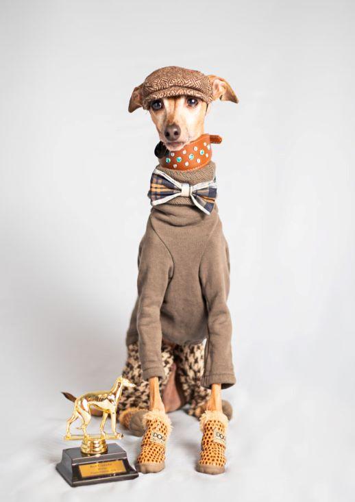 MEPP-ItalianGreyhound-Dog-Clothes-Trophy-Portrait