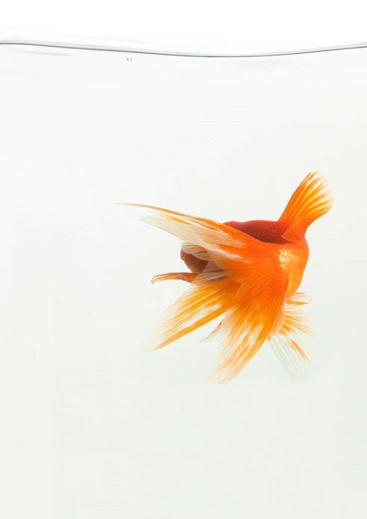 MEPetPhotography Fish